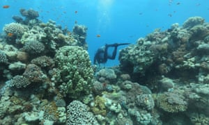 Coral reefs in the Red Sea off the southern Israeli resort city of Eilat
