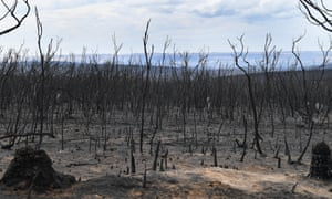 a field fo burnt trees to the horizon