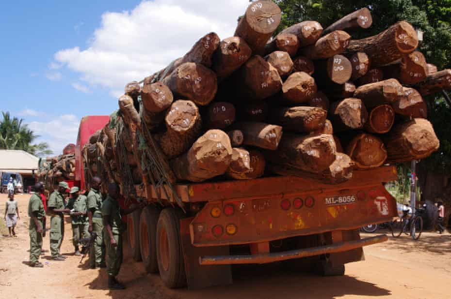 Timber loaded on a truck in Mozambique