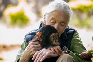 British primatologist Jane Goodall visits a chimp rescue centre in Entebbe, Uganda.