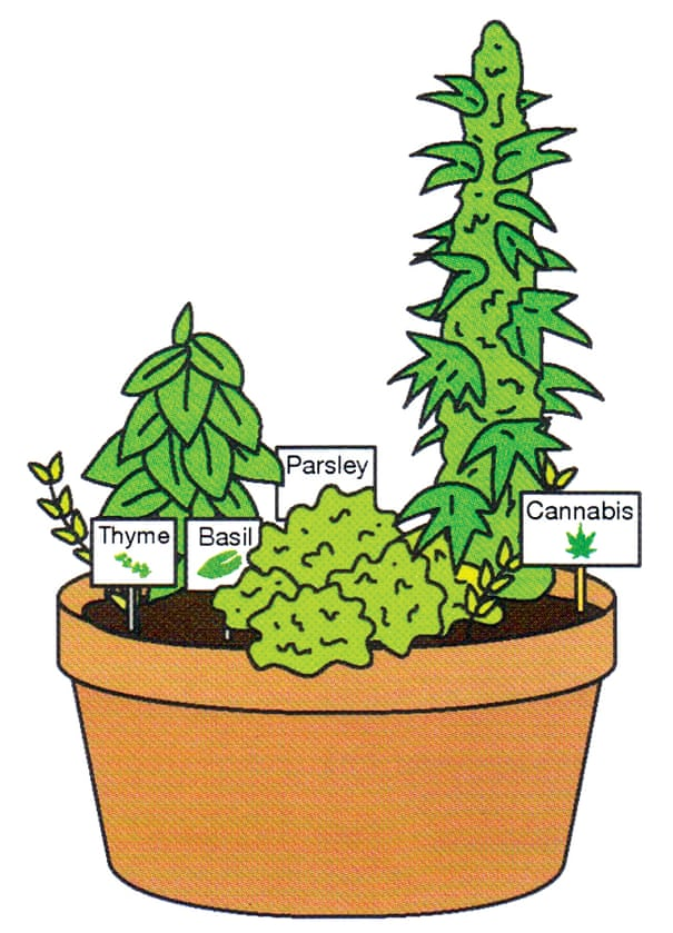 Should I grow my own weed at home? Here's what you need to know