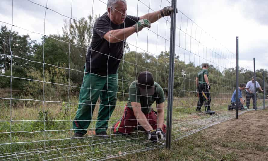 People build a metal fence to try to keep out African Swine Fever, on the border between eastern Germany and western Poland
