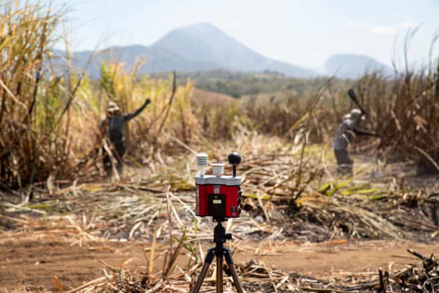 A temperature gauge sits in a sugar cane field