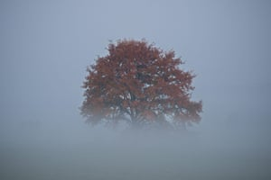 A tree is partially obscured by morning fog