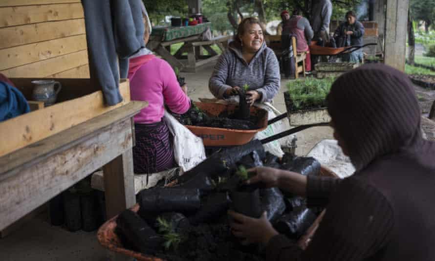 Women work at the local tree nursery in Cherán.