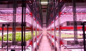 Urban farm growing lettuce and herbs