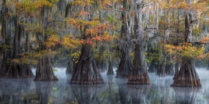 Eerie trees reflected in the swamp waters of the southern US