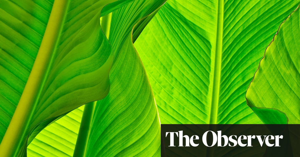 fe9cb7587c Let s go bananas  growing the leaves in your back garden