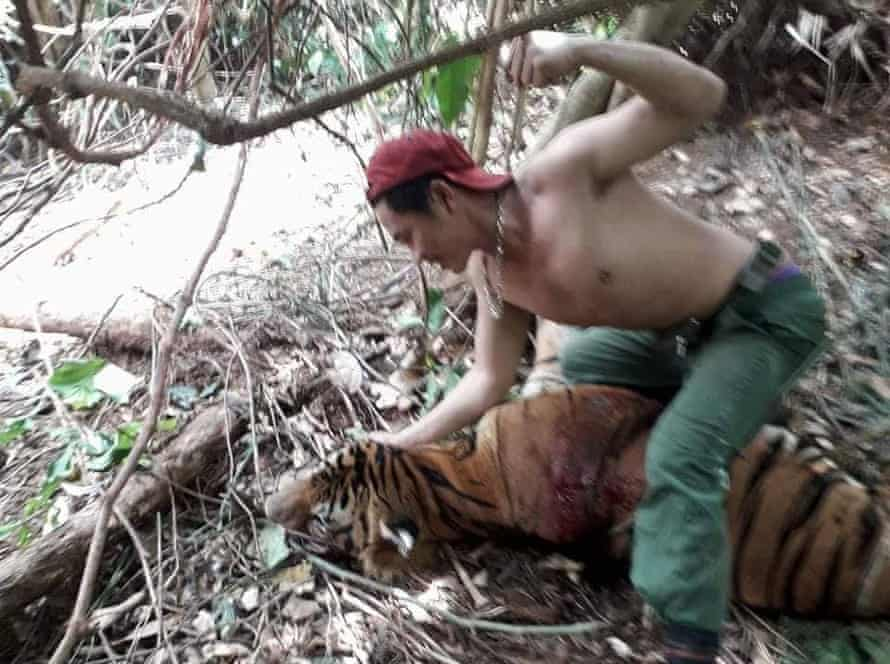A picture found on a confiscated mobile phone shows a suspected poacher standing over a dead tiger in a forest in Thailand