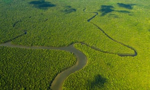 Aerial view of the Kinabatangan river.