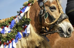 A horse's mane is braided for the event