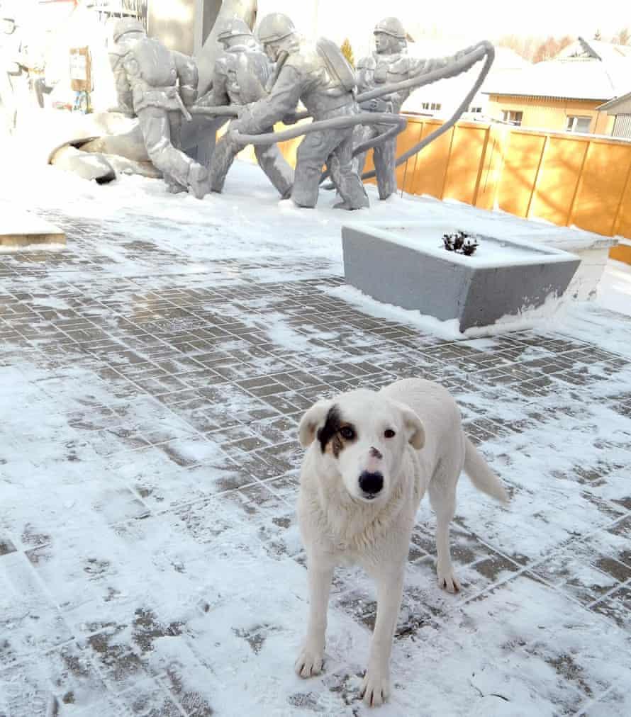 The abandoned dogs at Chernobyl endure harsh Ukrainian winters.
