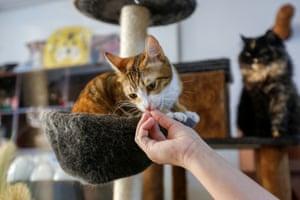 A worker feeds a cat.
