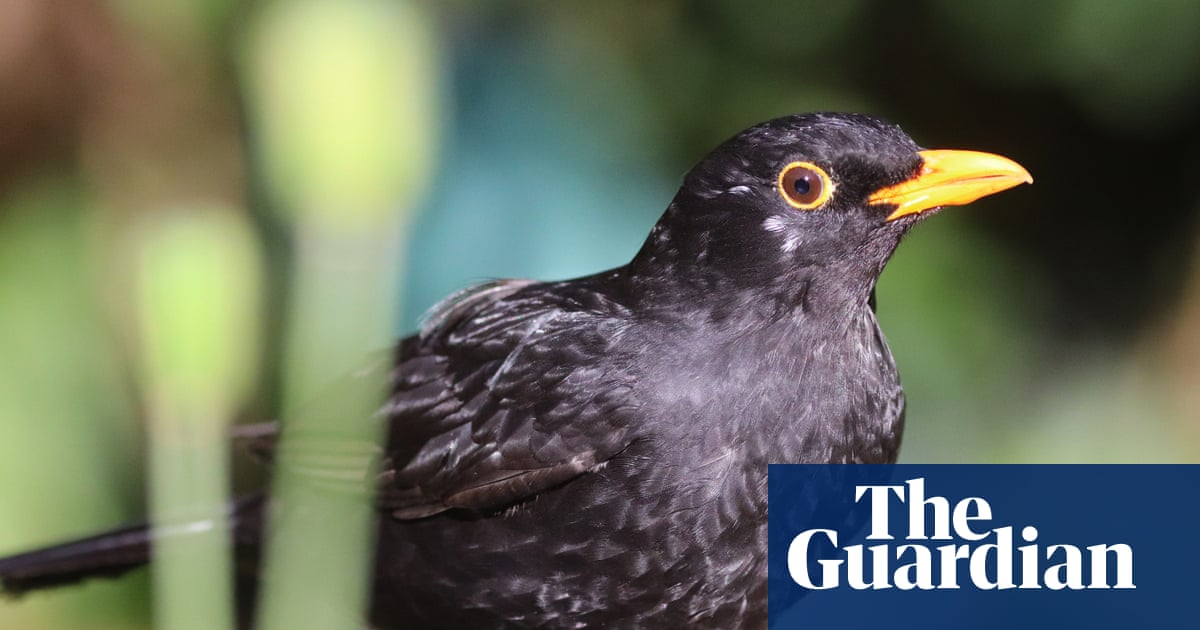 Lockdown yields first global sound map of spring dawn chorus