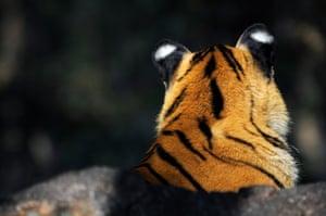 Pench Tiger Reserve, Madhya Pradesh, India