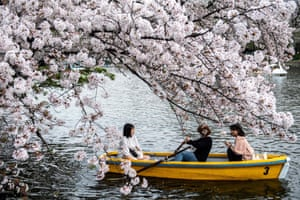 People ride a boat past cherry blossoms at Inokashira Park in Tokyo
