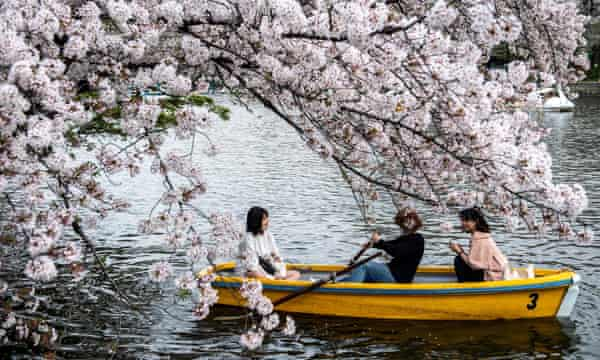 People ride a boat looking at cherry blossoms at Inokashira Park in Tokyo.