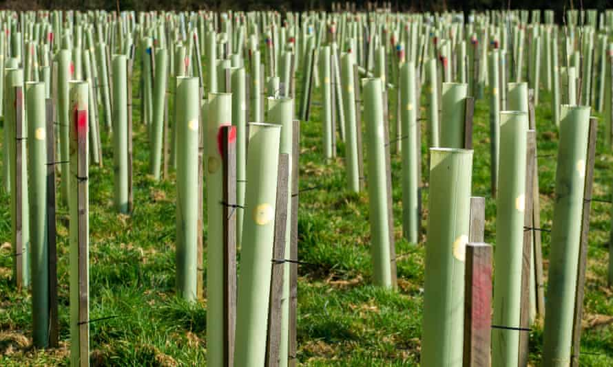 HS2 road and footpath closures, Tilehouse Lane, Denham, Buckinghamshire, UK - 01 Mar 2021 Mandatory Credit: Photo by Maureen McLean/REX/Shutterstock (11781682g) Tree saplings planted by HS2 last year and wrapped in plastic tubes as part of the HS2 mitigation are already dead. Part of Tilehouse Lane in Denham near the HS2 Chiltern Tunnel South Portal construction site has been closed by HS2 as has footpath. Acres of countryside have been destroyed by HS2 in Denham and West Hyde. Two tunnel boring machines named Florence and Cecilia, are on site being commissioned that will tunnel underneath the Chilterns of 10 miles. The controversial High Speed 2 Rail link from London to Birmingham puts 108 ancients woodlands, 693 wildlife sites and 33 SSSIs at risk HS2 road and footpath closures, Tilehouse Lane, Denham, Buckinghamshire, UK - 01 Mar 2021