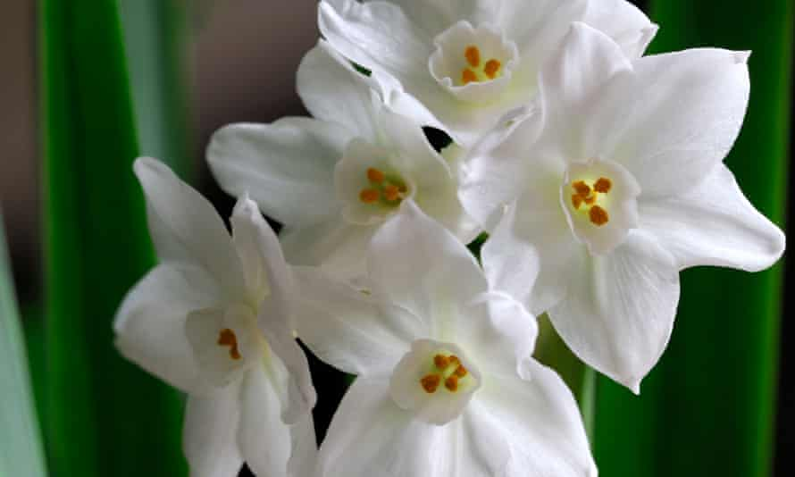 'I make time to put in an order for paperwhite narcissi.'