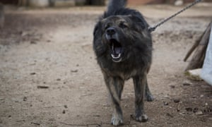 Dog Medo barks in a backyard in Peroj, Croatia. A fed up neighbour from a northern Croatian Adriatic village has won a temporary court order that says Medo must stop barking at night.