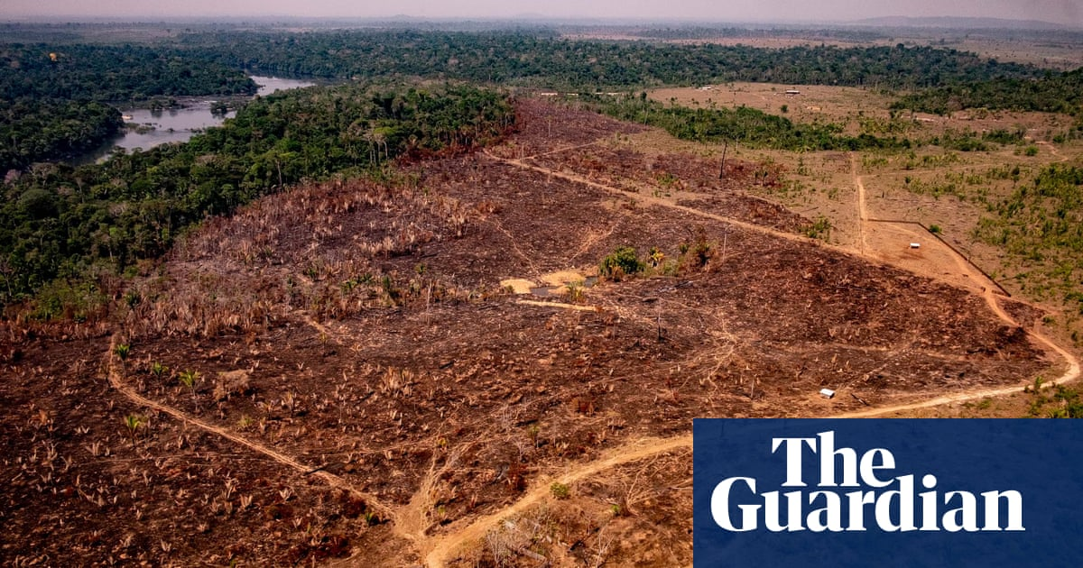 Deforestation in Brazilian Amazon hits highest annual level in a decade