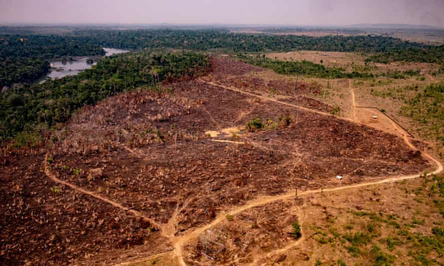 'Deforestation is still out of control,' Carlos Souza, a researcher at Imazon said.