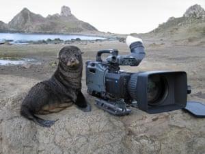 A sea lion pup next to a camera
