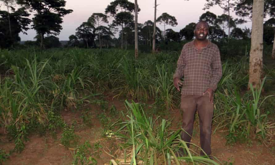 Nathan Mununuzi, a Ugandan farmer, shows the impact of drought on his pastures.