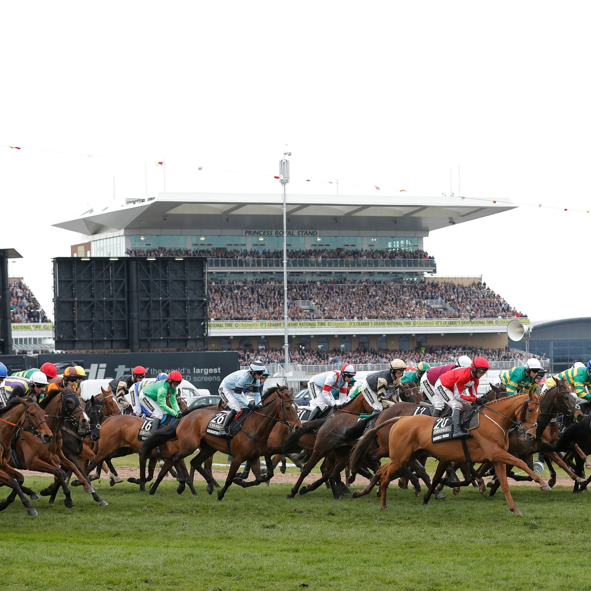 Horse racing betting questions who is the best binary options broker