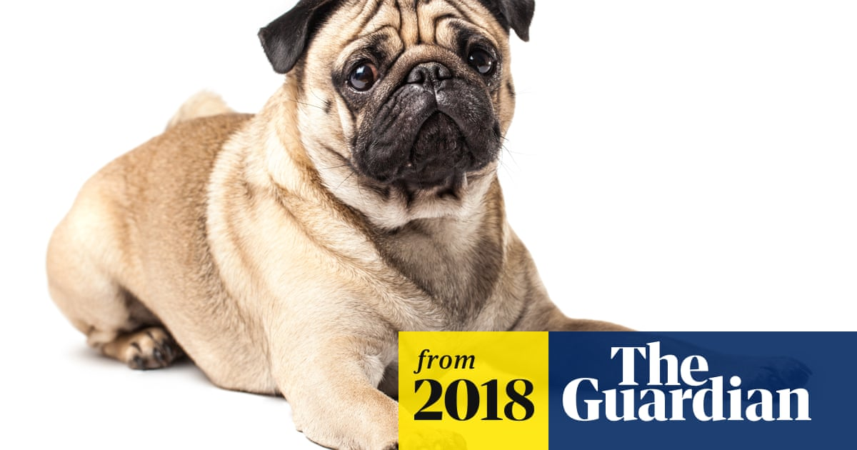 Think twice about buying 'squashed-faced' breeds, vets urge dog