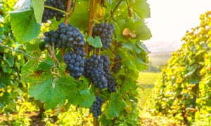 Wine is one of the products that can be affected by tariffs.