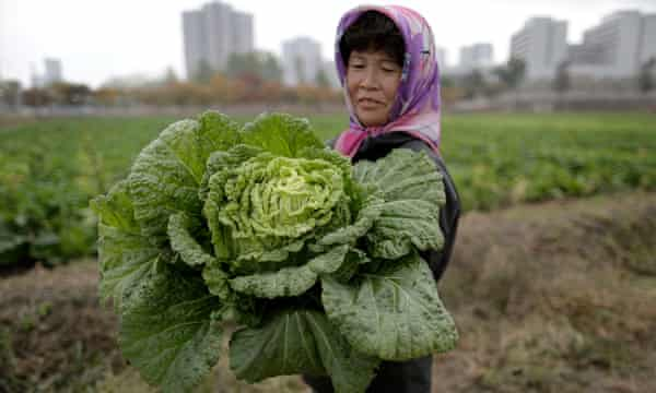 A farmer carries a cabbage on the outskirts of Pyongyang