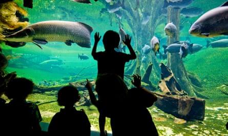 Aquarium at CosmoCaixa science centre