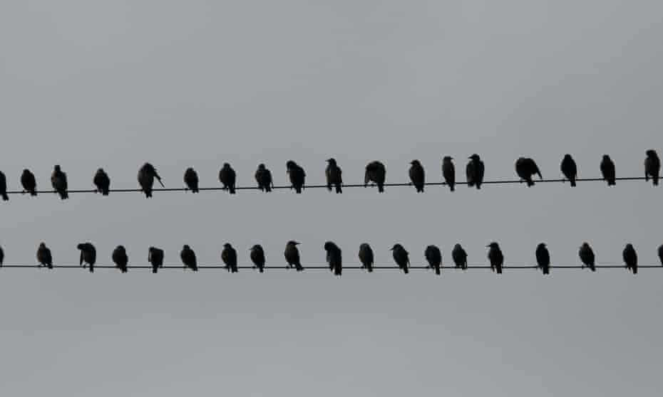 Birds on a wire by late comedian John Clarke
