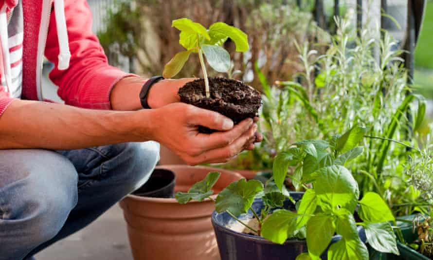 A gardener repots plants on a balcony