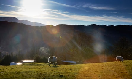 Sheep on the fells above Ambleside in the Lake District, Cumbria.
