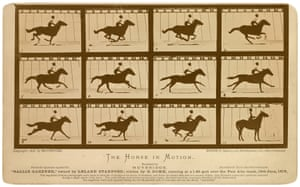 "Eadweard Muybridge, The Horse in Motion, ""Sallie Gardner,"" owned by Leland Stanford; running at a 1:40 gait over the Palo Alto track, June 19, 1878."