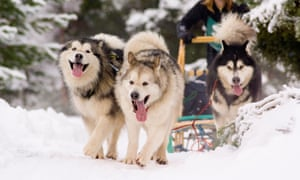 Dismal snow conditions last year forced officials to relocate the sled dog race 295 miles north to Fairbanks, Alaska, fundamentally altering the route.