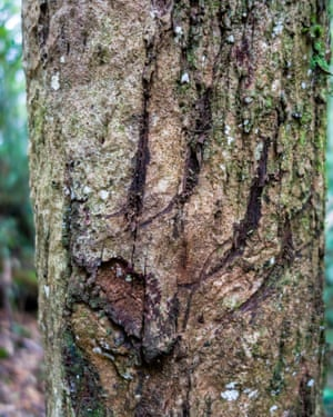 The team set up a camera trap here hoping to catch the tiger who made these impressive claw markings.