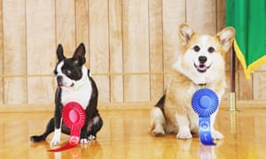 Top dog: which CV blogs won best in show this year?