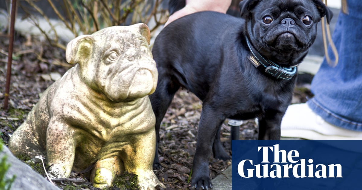 German town defends decision to sell family's pet pug on eBay