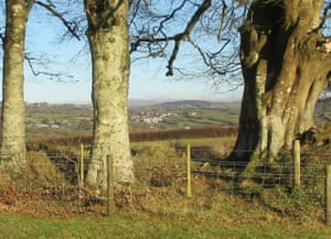 Beech trees and distant snow on Dartmoor.