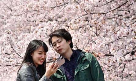 people taking photographs in front of cherry blossoms in Kohoku in Yokohama, near Tokyo