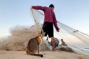 A cat looks on as a Palestinian fisherman pulls a net on a beach in the northern Gaza Strip