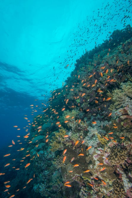 Superb corals on the island's rocky underwater outcrops.