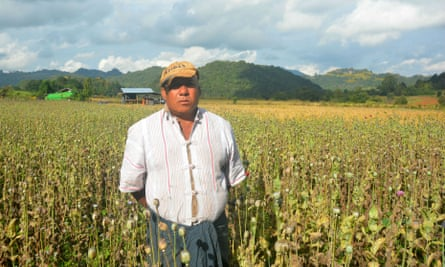 Opium farmer U Bo, in eastern Myanmar's Shan State, shows his crop.