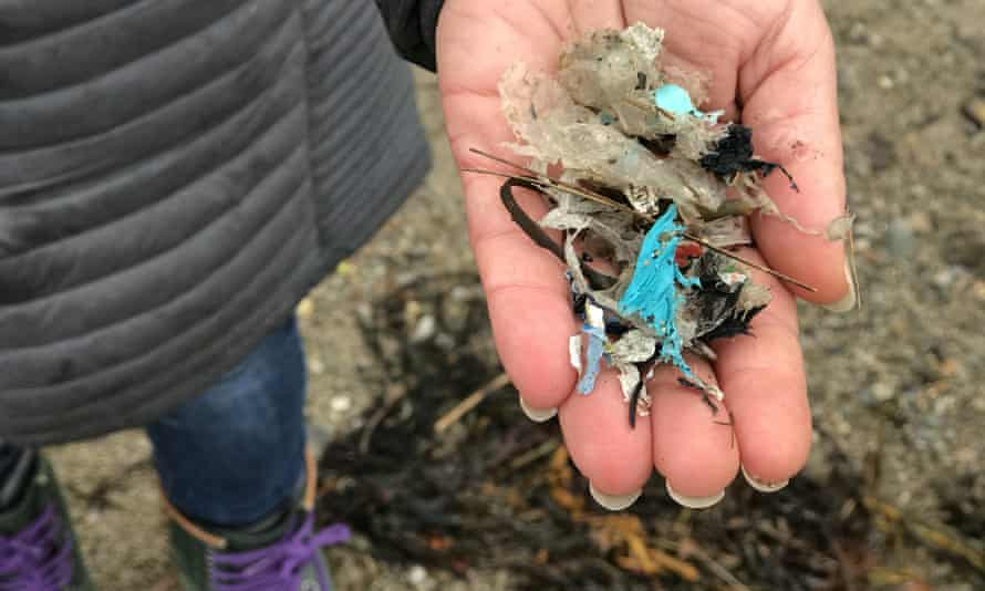 Shredded plastic collected on Sears Island