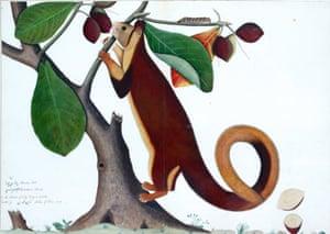 Malabar Squirrel, by  Shaikh Zain Ud-Din