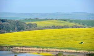Tractor in fields of rapeseed, UK