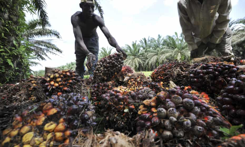 Oil palm workers